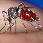 problem mosquito